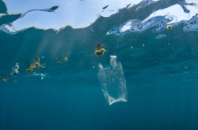 Порлумони Аврупо истифодаи зарфҳои пластикиро манъ кард